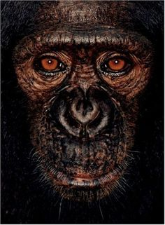 'James and Other Apes' by James Mollison, a  collection of 50 close-up portraits of gorillas, chimpanzees, orangutans and bonobo.  These images are a moving and powerful argument for the protection of the great apes and endorsed by world-renowned scientist and best-selling author Jane Goodall in her powerful introduction to the book.      James, on the front cover shown here, lives at Ape Action Africa in Cameroon.