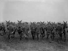 Mules at war Mules Animal, Army Dogs, Horse Wagon, War Horses, World War I, Zebras, Vintage Photographs, Animals Beautiful, Wonders Of The World