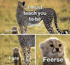 """Tasty Memes For Entertainment Purposes - Funny memes that """"GET IT"""" and want you to too. Get the latest funniest memes and keep up what is going on in the meme-o-sphere. Cute Animal Memes, Funny Animal Quotes, Animal Jokes, Funny Animal Pictures, Cute Funny Animals, Cute Baby Animals, Funny Dogs, Meme Pictures, Funny Animal Humour"""