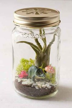 Spitfire Girl Dino Terrarium Kit - Urban Outfitters