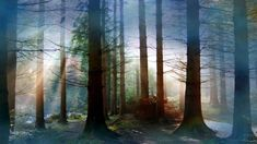 Fog in Forest Wallpaper_High Definition Wallpapers Misty Forest, Magical Forest, Tree Forest, Image Nature, Nature Photos, Mother Earth, Mother Nature, Forest Wallpaper, Nature Wallpaper