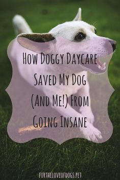 How Doggy Daycare Saved My Dog (And Me!) From Going Insane – Fur the Love of Dogs