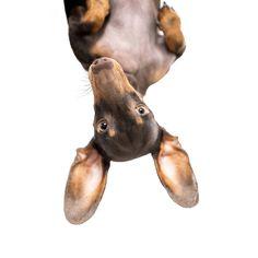 Kukucs!💞 Járt nálunk a nyuszi és hozott nektek egy újabb kihívást! 🐰🥰 Instasztoriba kiraktuk a videót, amiben megtaláljátok a részleteket! 🐾 A youtube videó linkjét a bioban is megtaláljátok🎥 Ezen a héten egy @omd_oh_my_dog standard/agár kézzel festett nyakörvet és @pajtispets 5 alkalmas privát kutyaoktatást nyerhettek. Ha már láttátok a videót, hogy tetszik az új feladat? 😍 Instagram Feed, Ohio, Teddy Bear, Marvel, Animals, Columbus Ohio, Animales, Animaux, Teddy Bears