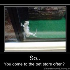 Oh lizards
