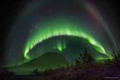 Giant Mushroom Aurora