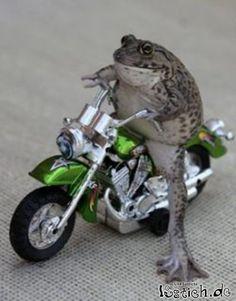 Harley Frogger
