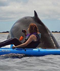 Whale & kayaker in close quarters! #kayak #kayaker #kayaking