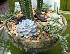Vida Suculenta: Arranjos de Mesa com Suculentas - Succulent Centerpieces