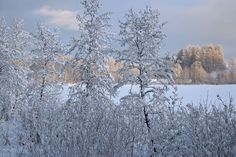 Digital photo collection about Estonian landscapes and species of Northern Europe Winter Pictures, December, Landscape, Gallery, Nature, Outdoor, Outdoors, Winter Photos, Roof Rack