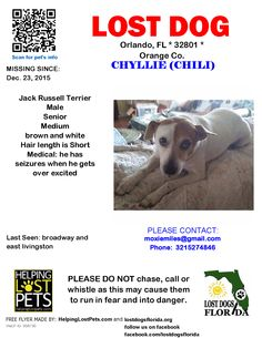 Lost Dog - Jack Russell Terrier - Orlando, FL, United States