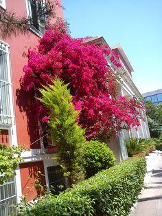 Panteion, Spring 2011! Public Administration, Athens, University, Spring, Plants, Flora, Plant, Athens Greece, Planets