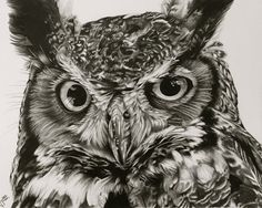 owl drawing 9