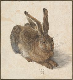 Albrecht Dürer (German, Northern Renaissance, The Hare (Der Feldhase) (also known as: The Young Hare; The Wild Hare), Watercolor and bodycolor (gouache) on a cream wash Famous Artists, Great Artists, Albertina Wien, Renaissance Kunst, High Renaissance, Renaissance Artists, Renaissance Paintings, Art Graphique, Animal Drawings