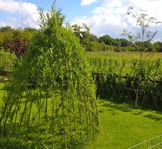 Living Willow Dome/Den Kit  LARGE 2.5m diameter x 1.8m tall  willow whips/rods