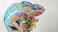 Colored Pencil Drawing Chameleon Original Animal by NatureDrawings, $40.00