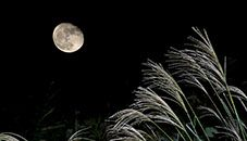 Moon and Japanese Silver Grass