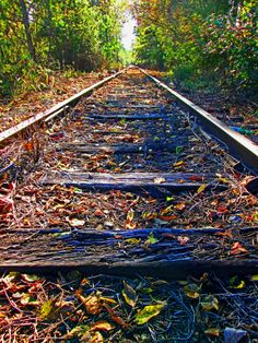 Rails Thru The Forest|Love's Photo Album