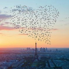 Love is made in the sky by birds.....