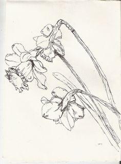 Daffodil Pencil Drawing