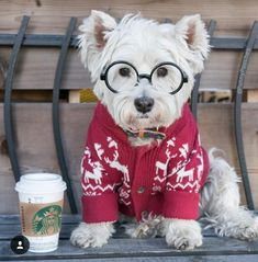 My Harry Potter look Westies, Westie Puppies, Beagle, Cute Puppies, Cute Dogs, Dogs And Puppies, Chihuahua Dogs, Doggies, West Highland Terrier