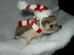 Step 13: Look at this hedgehog wearing a tiny hat.