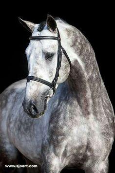 always my dream horse.. till we meet again my dear Delaware GS!
