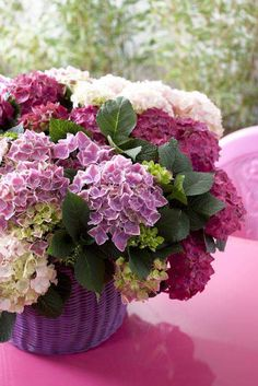 Raindrops and Roses: Photo My Flower, Flower Vases, Flower Power, Beautiful Flower Arrangements, Floral Arrangements, Fresh Flowers, Beautiful Flowers, Simply Beautiful, Hortensia Hydrangea