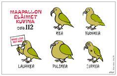 Eläinlajit 112 Finnish Words, Ancient Aliens, Proverbs, Science, Comics, Memes, Funny, Teacher Stuff, Birds