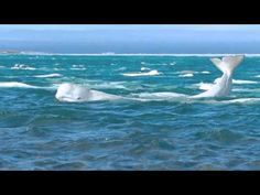 NRDC Monthly Partners can help save the last 340 beluga whales of Cook Inlet, NRDC BioGems Defenders.