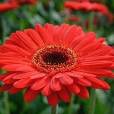 10 καλοκαιρινά λουλούδια που κλέβουν την παράσταση! Flowers, Plants, Florals, Planters, Flower, Blossoms, Plant, Planting
