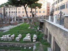 "Largo di Torre Argentina isn't just a square in Rome that hosts four  Republican Roman temples, and the remains of Pompey's Theatre - the site  that Julius Caesar was assassinated. No, nowadays, this unique travel  destination has a new, ""cuter"" identity. Let's take a look..."