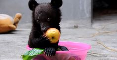 bear having a bath