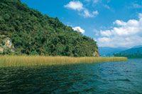 El juncal  que rodea la laguna constituye un hábitat de considerable importancia porque aporta alimentación y refugio a la fauna.
