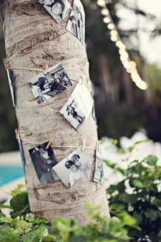 pictures on tree :):):)