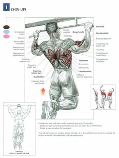Great article on pull-ups, useful for beginners (although it calls them chin-ups). Overhand grip is pull-ups ...underhand is chin-ups (where I come from!) lol. One of the best compound exercises for building muscle, strength and mass. Works back, shoulders, biceps and forearms.
