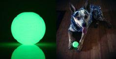 ChuckIt! Max Glow Ball Dog Toy