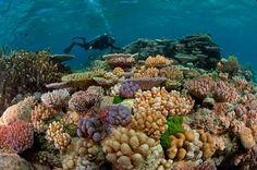 グレートバリアリーフ - オーストラリア / Great Barrier Reef - Australia