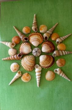 Sea Scapes by icyndi creations ~ Sea Shell Sculptures