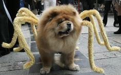 Photo Reuters  Un chien-araignée à Manille, aux Philippines.