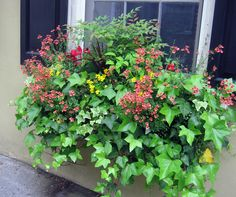 Coral diascia, yellow snaps, nandina, and English ivy.