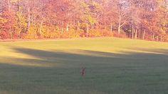 Running the field