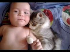 Cute cat loves baby - from funny and cute cats and babies collection - Awww very cute - Must Watch Video Baby Animals, Funny Animals, Cute Animals, Crazy Cat Lady, Crazy Cats, Calin Gif, I Love Cats, Cute Cats, Gato Gif