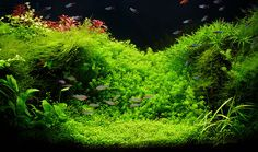 Introduction To A Freshwater Planted Aquarium (Natural Style)