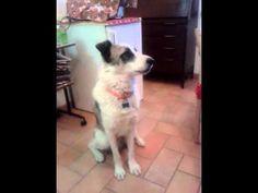 """Waooo...Questo cane sa dire ''mamma""""!"""