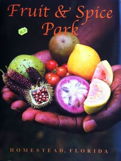 "Fruit and Spice Park Florida contains more than 500 varieties of fruit, nut, and spice trees, including 80 plus banana varieties, 125 varieties of mango, more than 40 varieties of grapes, 70 bamboo varieties, plus guava, jackfruit, canistel, sapodilla, longan, lychee, mamey sapote, black sapote (""chocolate pudding fruit""), miracle fruit, jaboticaba, cecropia (""snake fingers""), coffee beans, and wax jambu, as well as other more exotic edibles."
