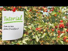 Cum se taie pomii fructiferi? Toaletare pomi fructiferi- Ghid video Leroy Merlin Romania - YouTube Merlin, Projects To Try, Youtube, Youtubers, Youtube Movies