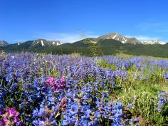 westcliffe colorado | Westcliffe Colorado Custer County Official Website All About the Area ...