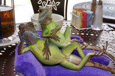 henry_lizardlover_urth_cafe_lunch_with_lizards_dsc01005_web_reduced.jpg (2400×1595)