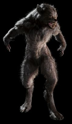 """Other then that, there's a clear distinction from the """"Wolfman"""" werewolf and the """"American Werewolf in London"""" werewolf. Description from sideshowcollectors.com. I searched for this on bing.com/images"""