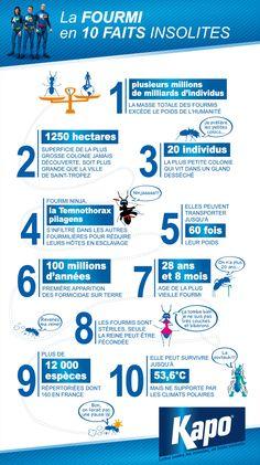 Insecticides Kapo - Infographie : 10 faits insolites sur les fourmis